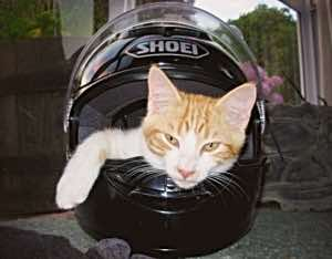biker cats little
