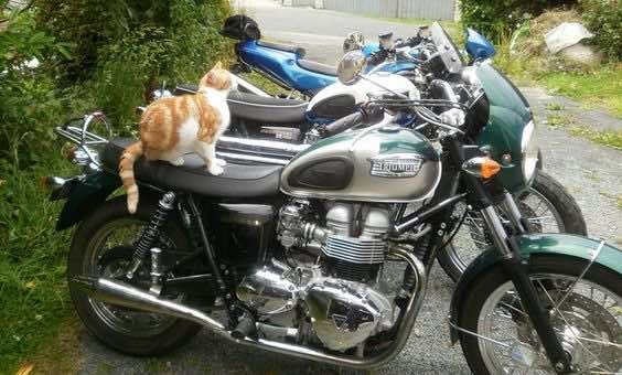 cats are heavily involved with this motorcycle blog