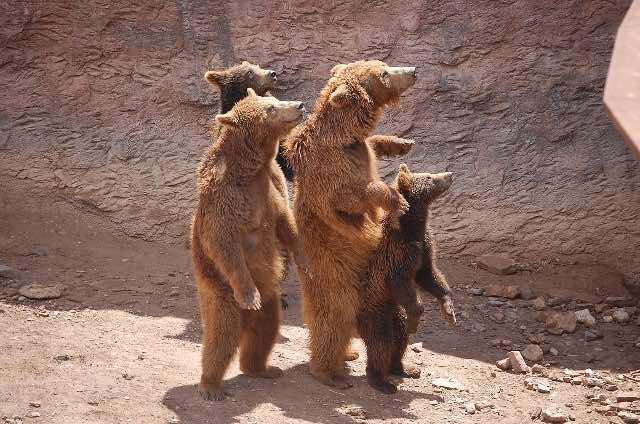 biker rallies may involve bears