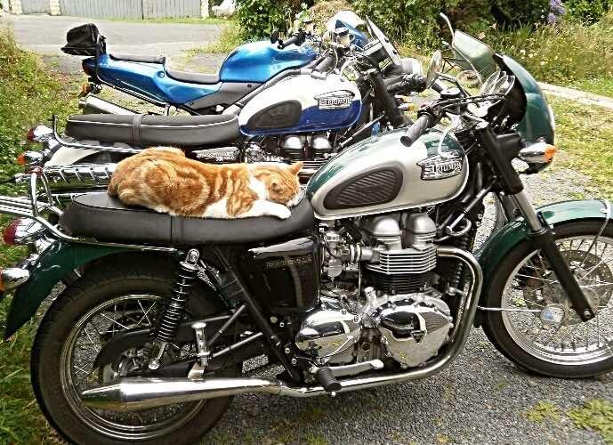 biker-cats-check-details