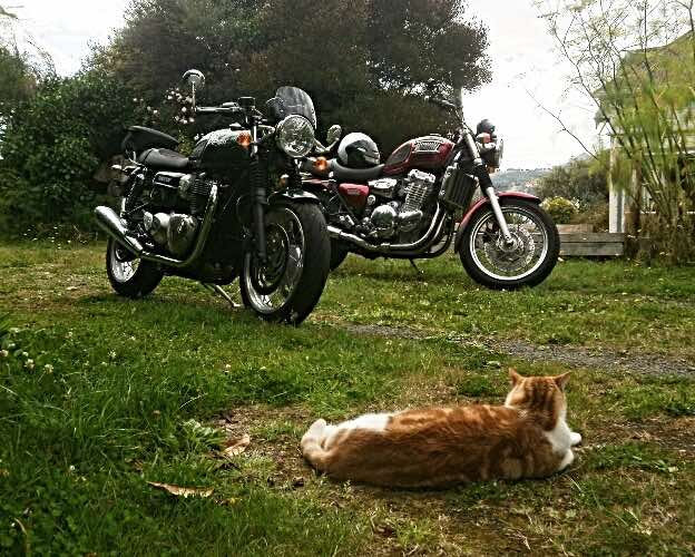 biker-cats-handle-outdoor-security