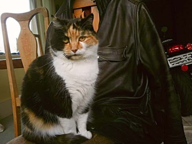 biker-cats-inspect-gear