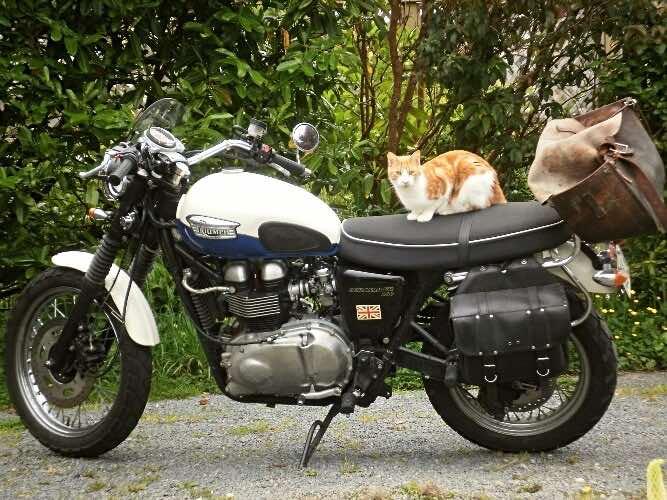 biker-cats-inspect-motorcycles
