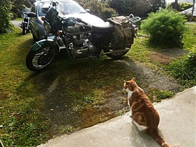 motorcycle-cat-at-garage-door