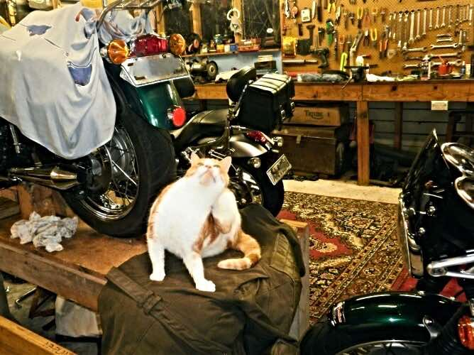 motorcycle-cat-on-jacket